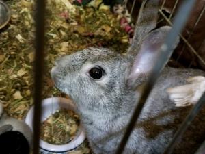 Bunny the Rabbit
