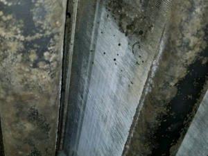 Buildup of Bacteria & Fungal Growth on AC Evaporator Coils